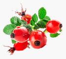 sok z owoców dzikiej róży