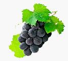 sok z owoców winogrona